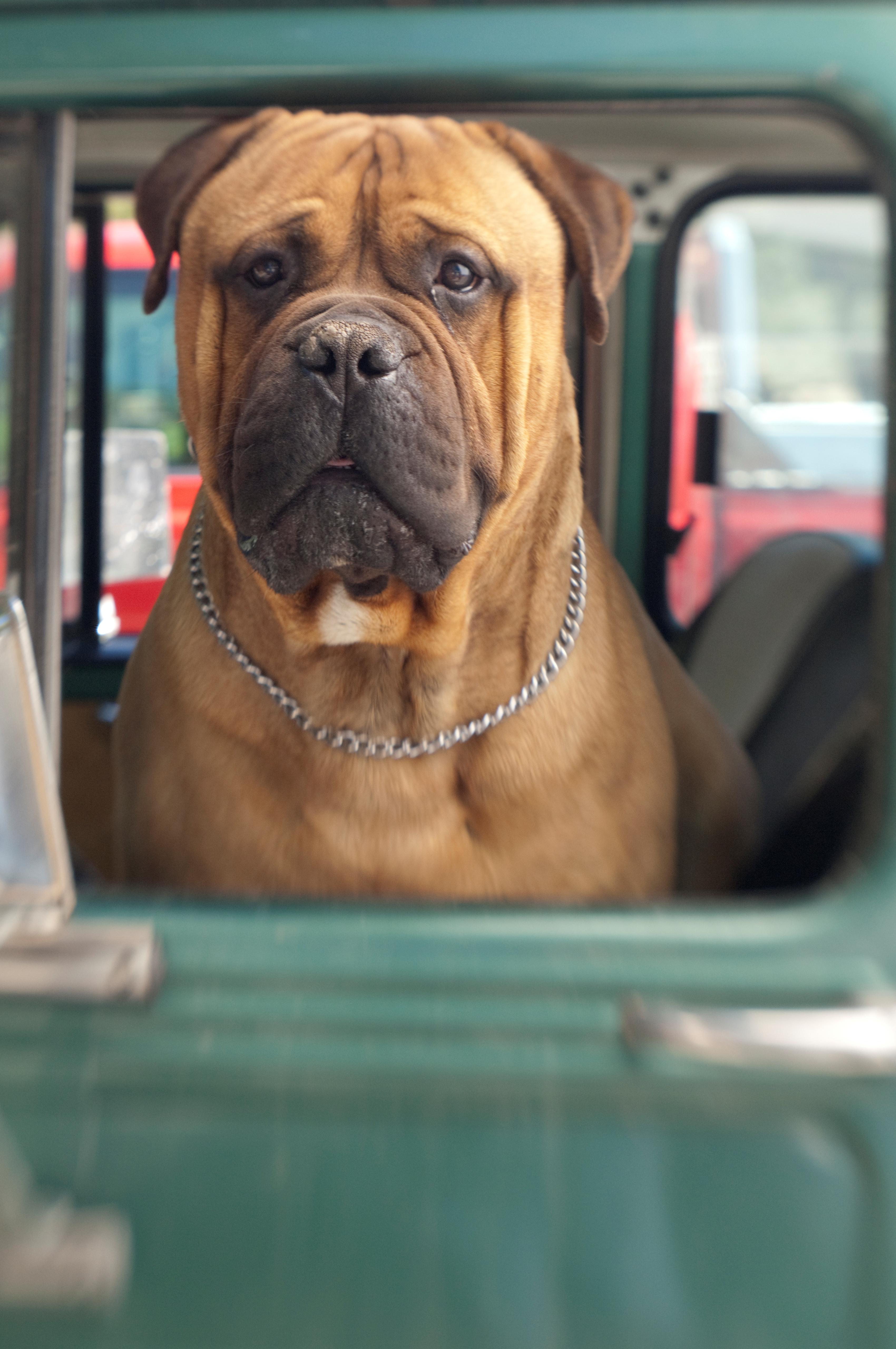UK Pet Transport