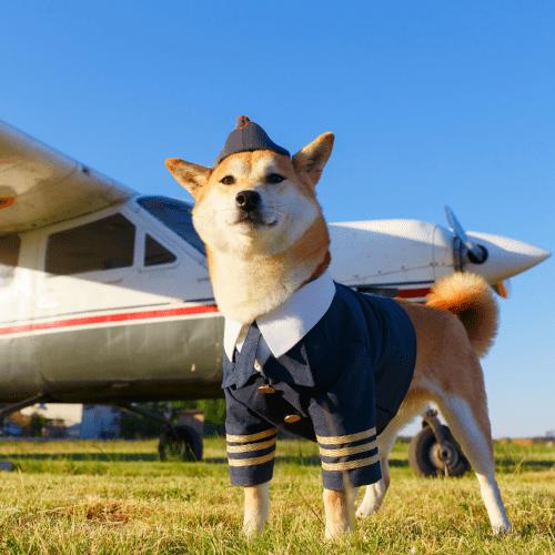 Worldwide Pet Transport