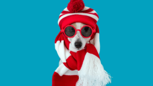 pet holiday, holiday with pets, puppy holiday