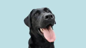 dog behaviour, dog body language, understanding pets