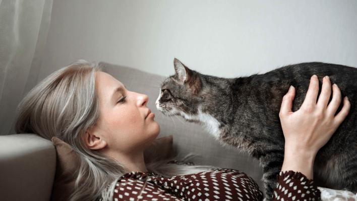 cat emotions pet advice