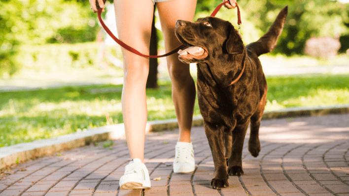 dog walking safety pet advice