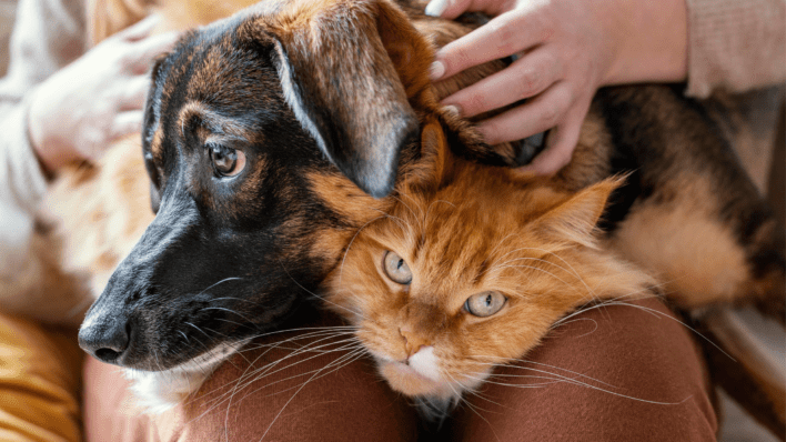 going on vacation pets pet advice